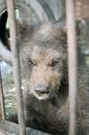 Россия сплошь усыпана медведями в клетках: как и 15 лет назад