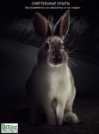 Смертельные                      опыты. Эксперименты на животных и на людях. Герберт Штиллер,                      Маргот Штиллер, Илья Вайс