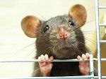 >К Международному дню в защиту подопытных животных - о проблеме опытов на животных и истории антививисекционного движения в России | ВИДЕО